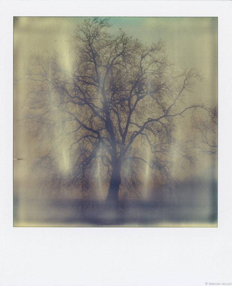 Arbre, Domaine Pique Caillou, Polaroid SLR670 + Impossible color 600