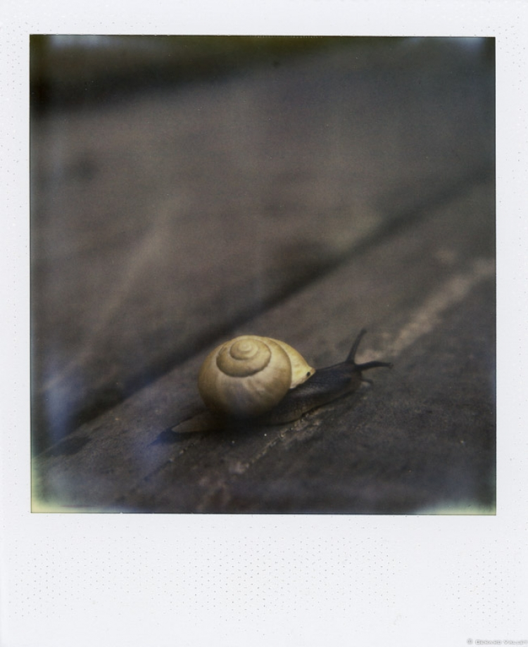 Escargot, Bassin d'Arcachon, Polaroid SLR670 + Impossible color 600