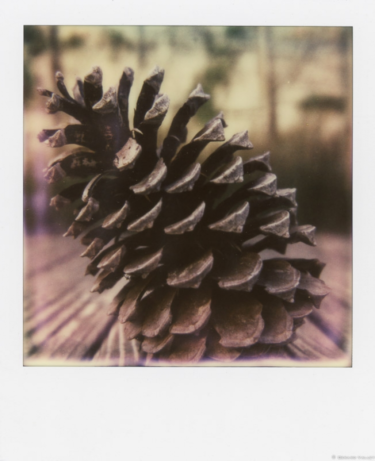 Pigne, Bassin d'Archachon, Polaroid SLR670 + Impossible color 600